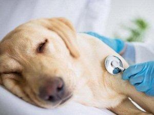 что дать собаке при отравлении