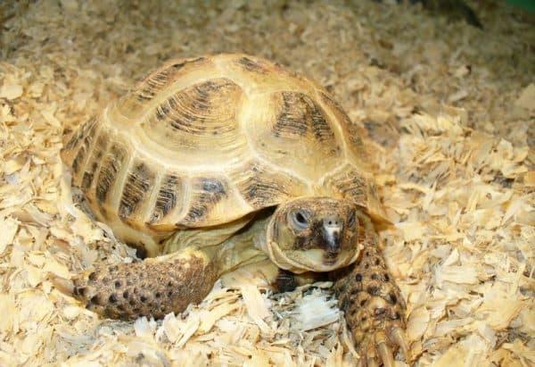 Черепахи дома