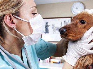 лечение соплей у собак