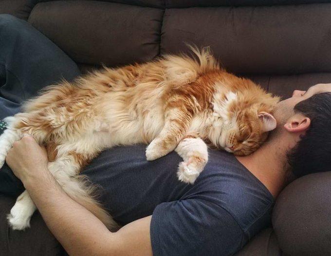 кошка спит на груди у хозяина