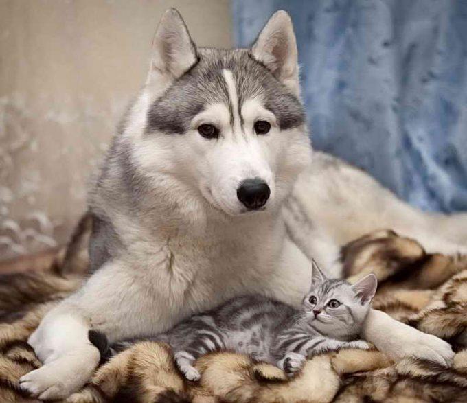 опекунство собаки над кошкой
