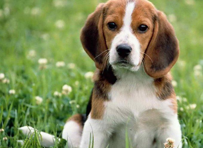в чем преимущество стерилизации собак