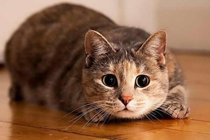 как распознать аллергию у кошки