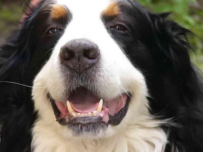 симптомы стоматита у собак