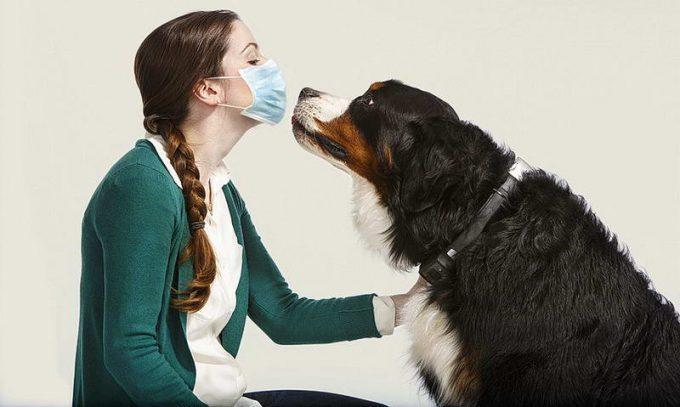 что вызывает аллергию на собак
