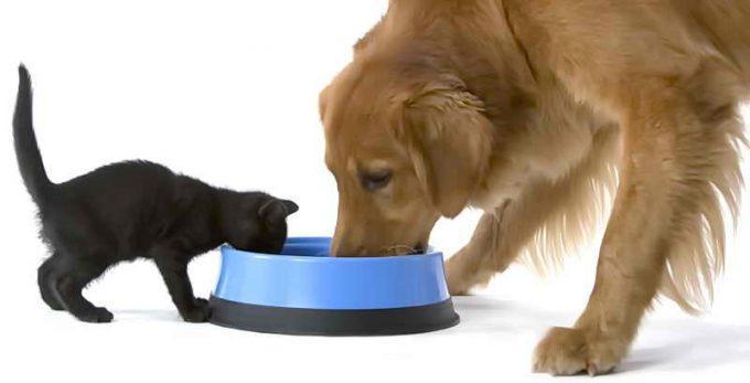 кот и собака едят один корм