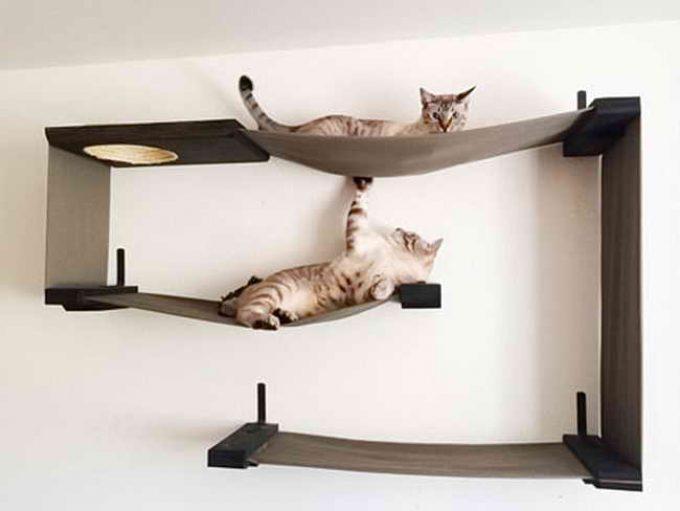как приучить кошку к лежанке