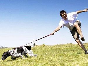 отучить собаку тянуть поводок и идти рядом