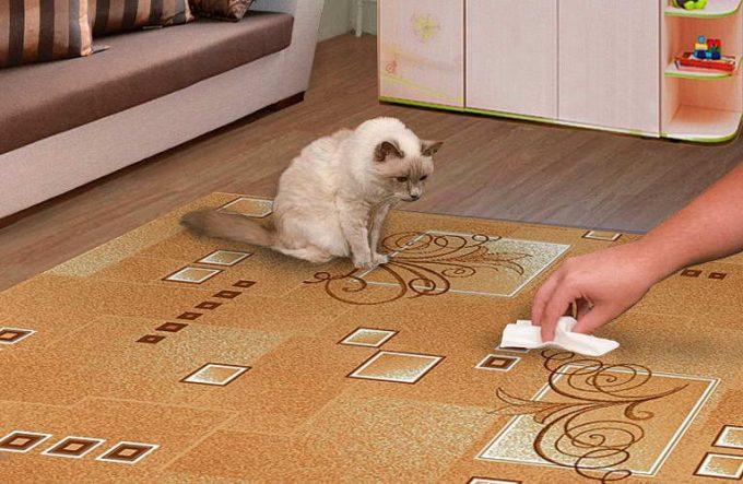 застарелый запах кошачьей мочи
