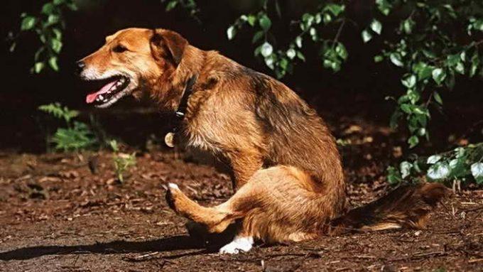 дискомфорт анального отверстия у собаки