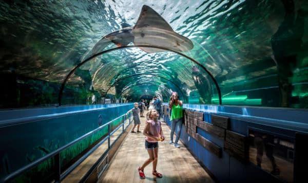Сиднейский аквариум (Австралия)