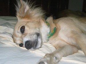 признаки энтерита у собак