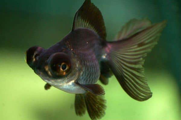Телескоп рыбка читайте статью