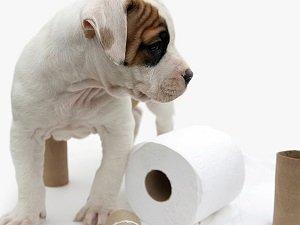 слабительное средство для собак