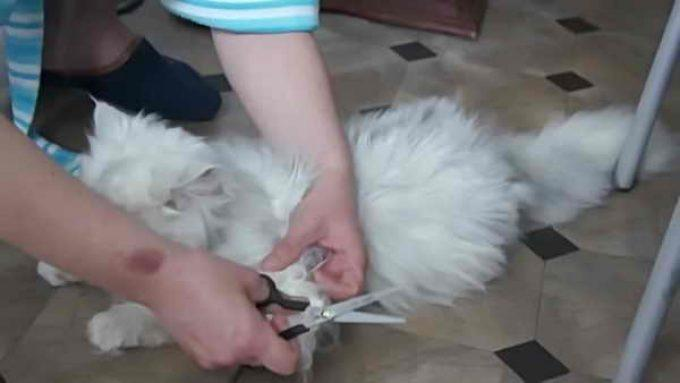 колтуны обрезают ножницами