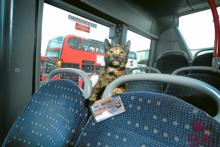 кот и автобус