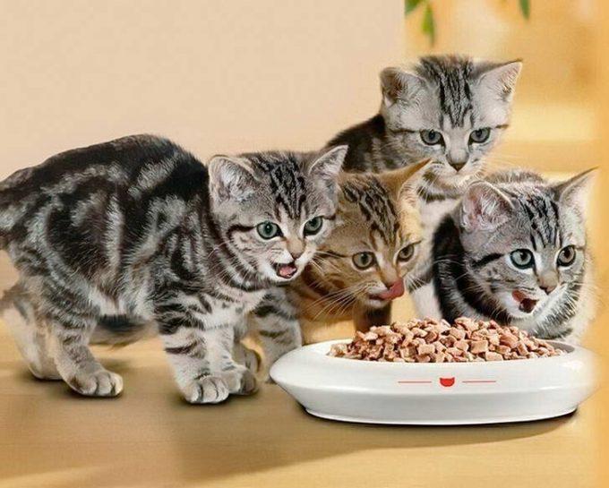 как отучить кошку есть корм