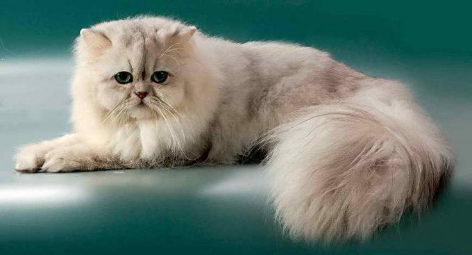 как создать условия для долголетия кота