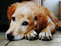 авитаминоз у собаки