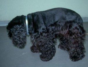 Дископатия у собак: что это такое и как лечить