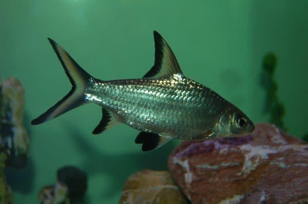 Акулий балу - фото