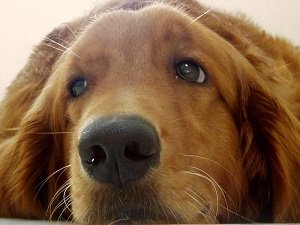 сопли у собак лечение
