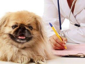 лимфоцитарно плазмоцитарный гастрит у собак лечение