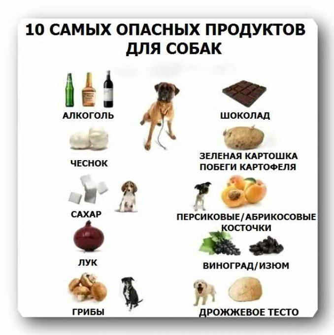 самые опасные продукты для собак