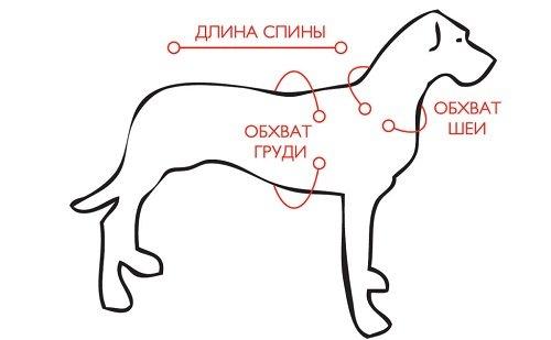 купить шлейку для собаки