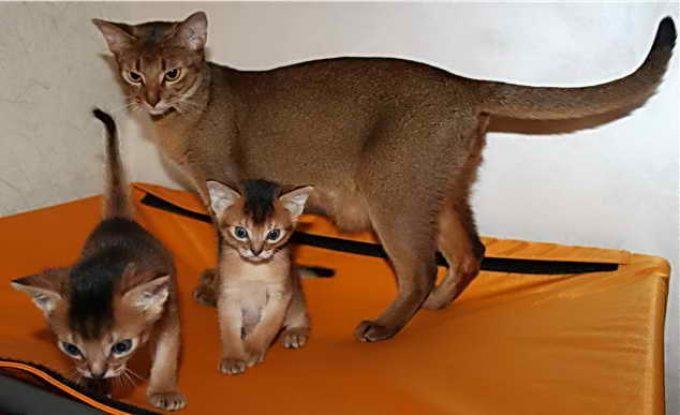 как посчитать кошачьи года по человеческим