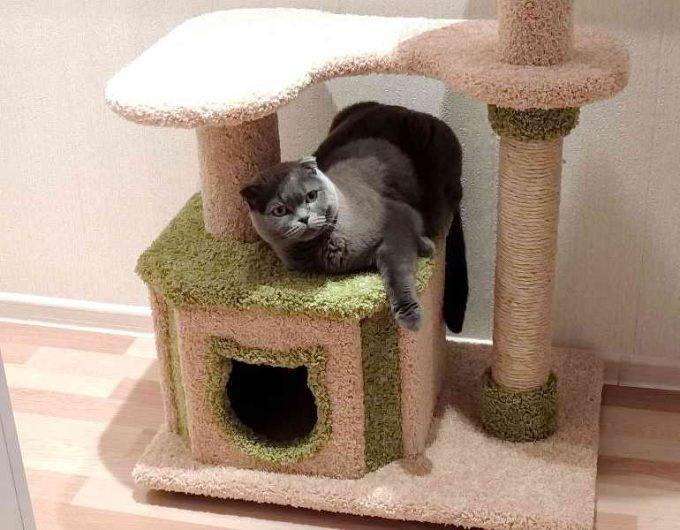 какой домик лучший для кошки