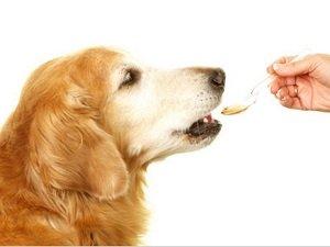 как выходят глисты у собак после суспензии