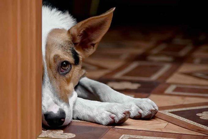 почему собака грызет обувь