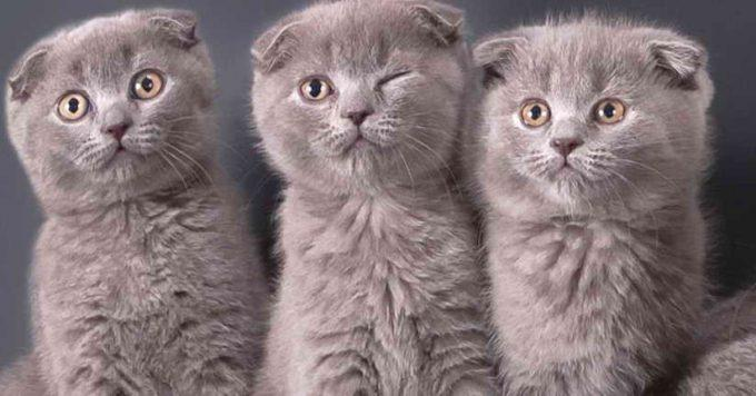 причины астмы у кошек