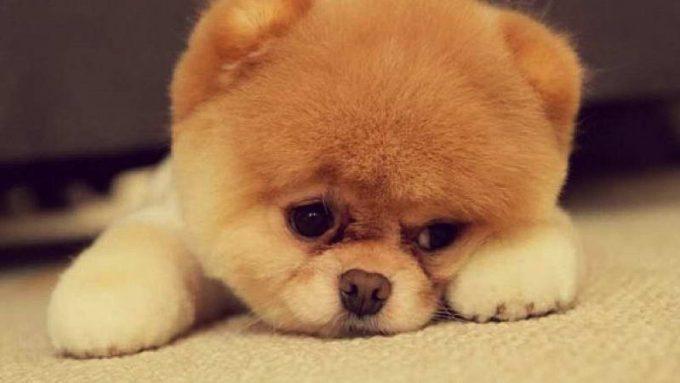 на какие породы собак меньше всего возможна аллергия