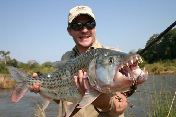 Рыба голиаф. Содержание, фото и видео.