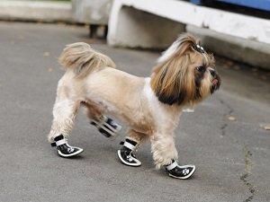 размеры обуви для собак