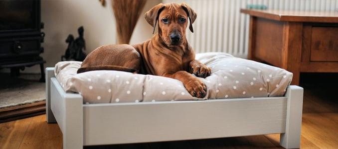 Почему собака храпит и что делать?