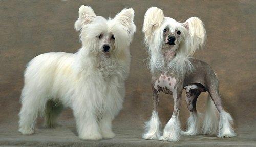 маленькие породы собак фото с названиями пород