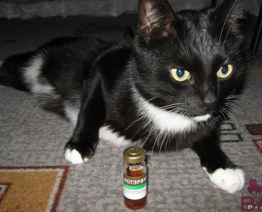 Средство Котэрвин для кошек описание, стоимость, отзывы