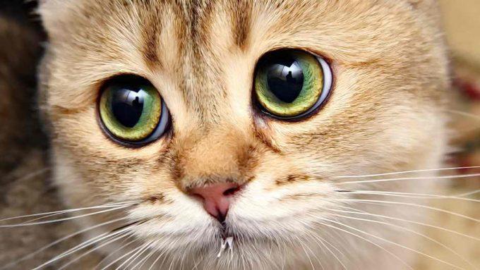 у котенка рахит