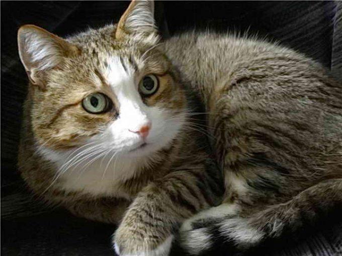 почему у кошки разные глаза