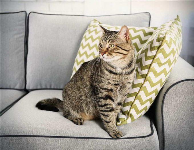 разные способы убрать запах кошачьей мочи с дивана