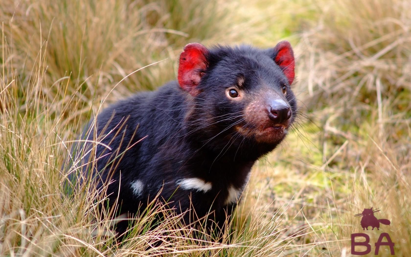 что тебя австралийские животные фото с названиями сайт гавнистый, меня