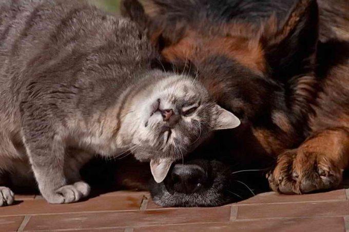 кошка дружит с собакой