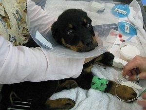 энтерит симптомы и лечение у взрослых собак