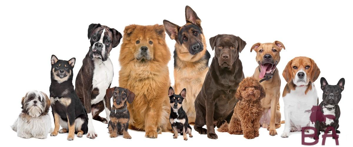 Как называется порода собаки из фильма Хатико