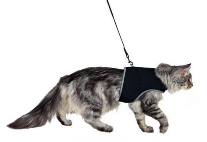 кот идет на прогулку в шлейке