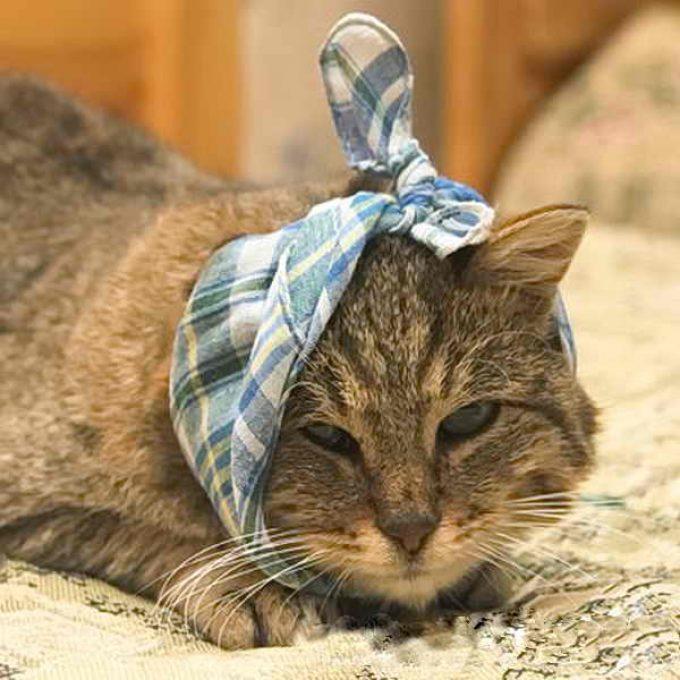у кошки болит ухо