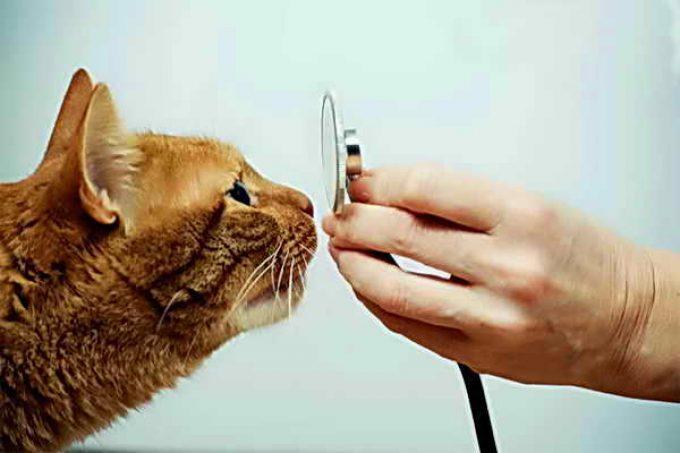 проверка носа у кошки